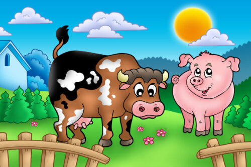 Cow and pig in field