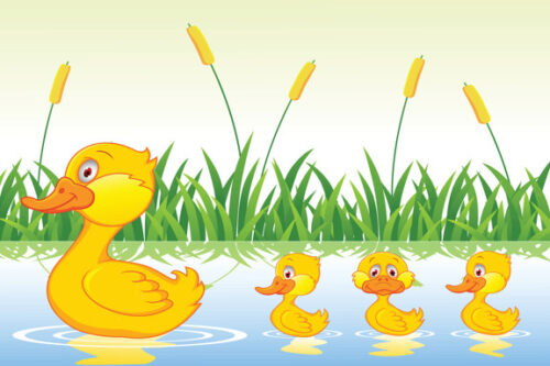 Mother duck and ducklings swimming in water