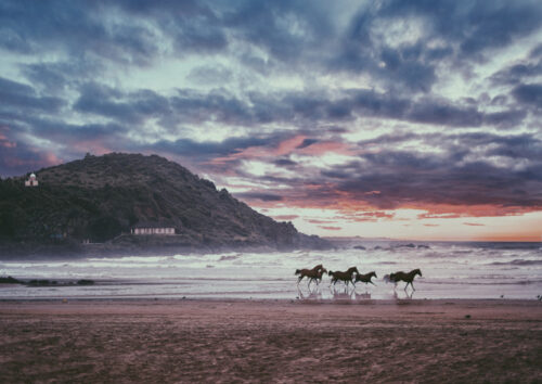 Horses running along the beach