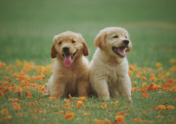 Two cute puppies sitting on a meadow