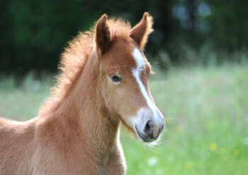 Close up of a foal in field