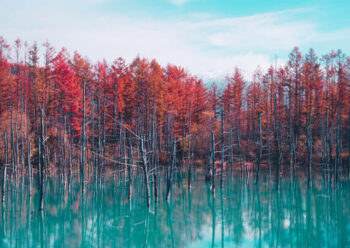 Water surrounded by copper leaved trees
