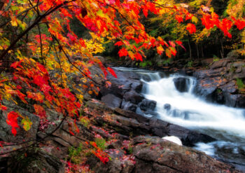 Autumnal leaves on tree near a stream