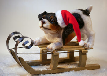 Dog wearing a Christmas hat on a sledge