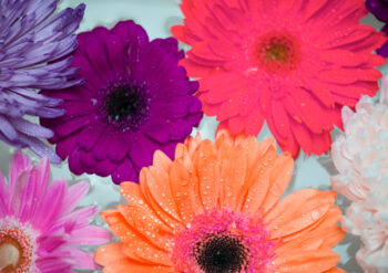 Multi coloured flowers