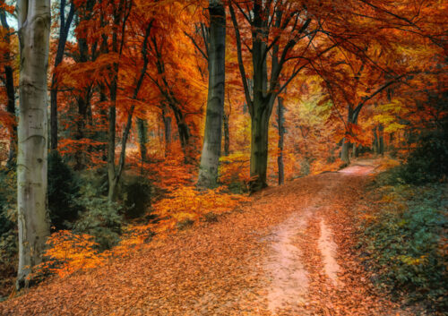Road through trees with autumnal leaves