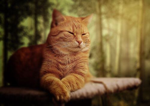 Ginger cat laying down with mottled forest background