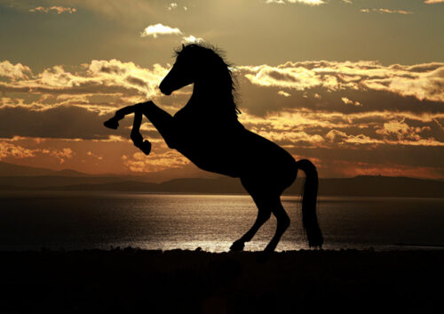 Silhouette of a horse rearing