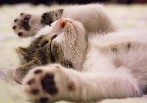 Cute kitten laying on its back asleep