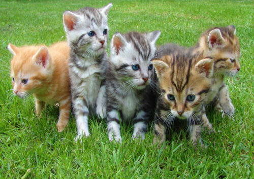 Five cute kittens sitting on the grass
