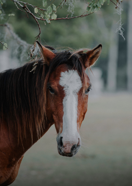Close up of a brown horse