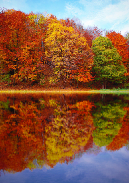 Autumnal trees reflected in a lake