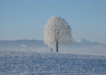 Snowy landscape with tree covered in snow
