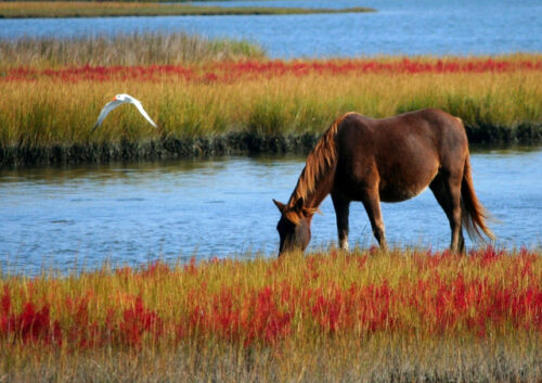 Horse grazing by the water