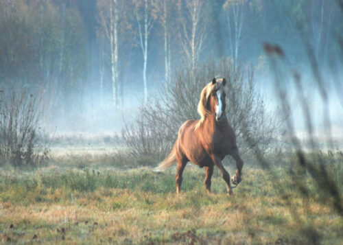 Horse running near woodland