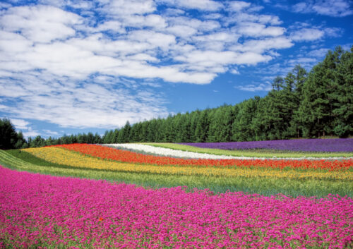 Field of different coloured flowers